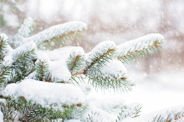 Fremont-Winema National Forest Christmas tree permits on sale; Free permits for 4th and 5th grade students
