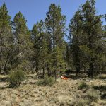 173rd FW joins forces with Klamath Search and Rescue Team in simulated exercise