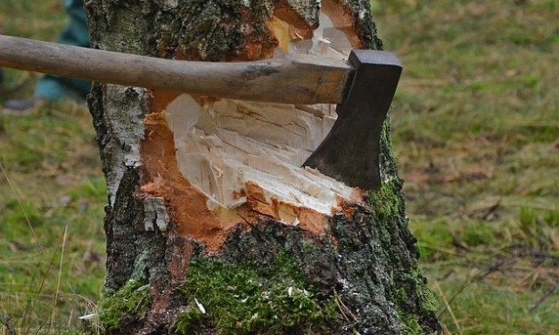 Special firewood cutting area open on Chiloquin Ranger District