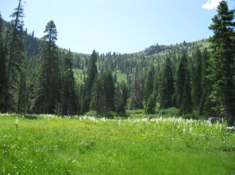 Steve Fork Meadows in the Red Buttes Wilderness have recovered from a long grazing history.