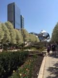 tulips city
