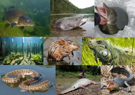 River Fauna