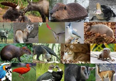 Fauna of America