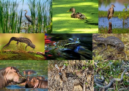 Fauna of the marsh