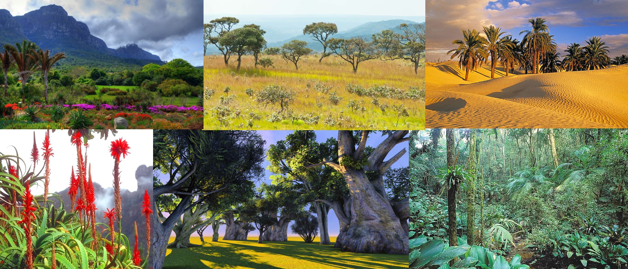 Flora of Africa