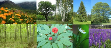 Flora of Europe