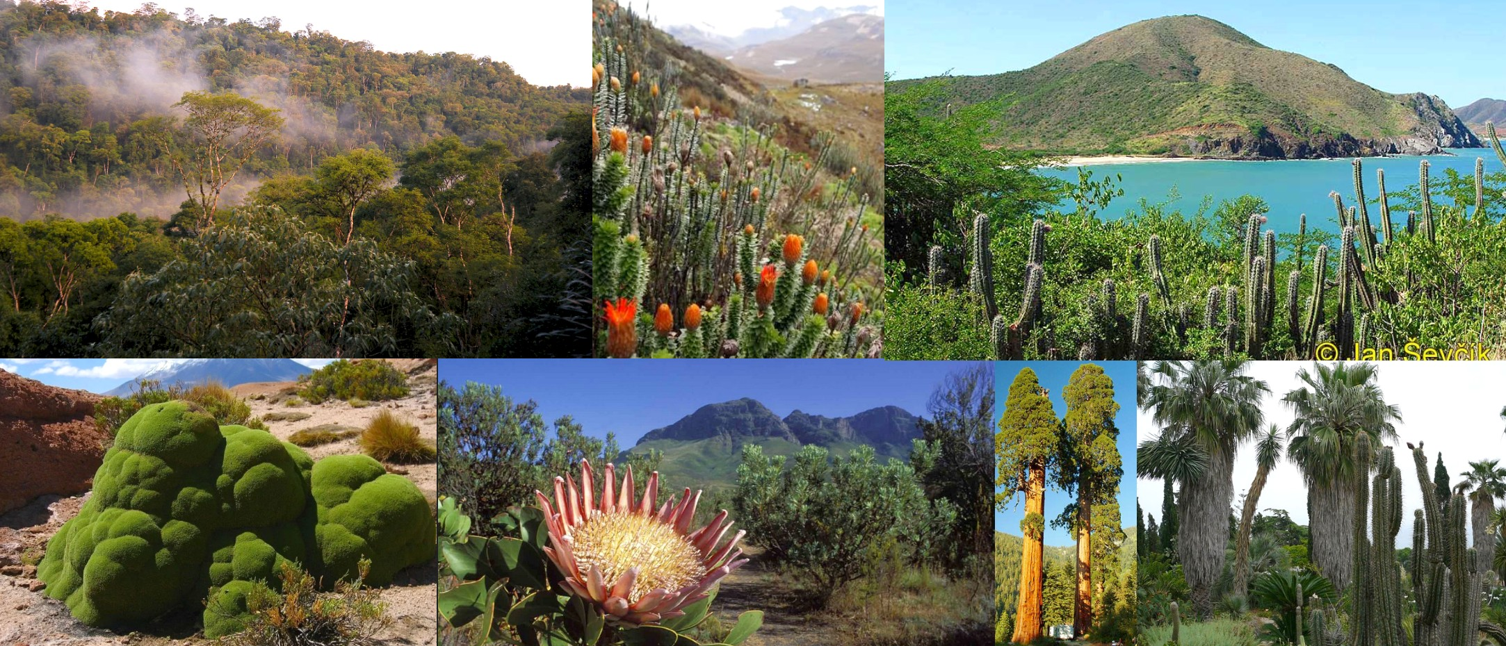 Flora of South America
