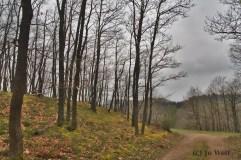 Beim Wandern am zweiten Tag war ich entspannter und konnte die Natur genießen.