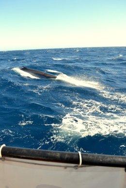 Der erste Wal in Sicht