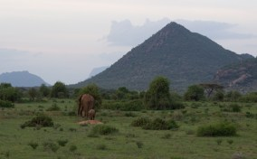 Elephants in front of hilly landscape.