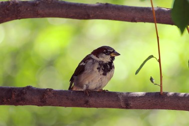 Bird in Carl Schurtz Park New York
