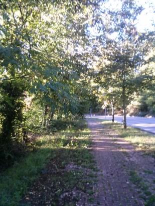 Percorso nel bosco 2