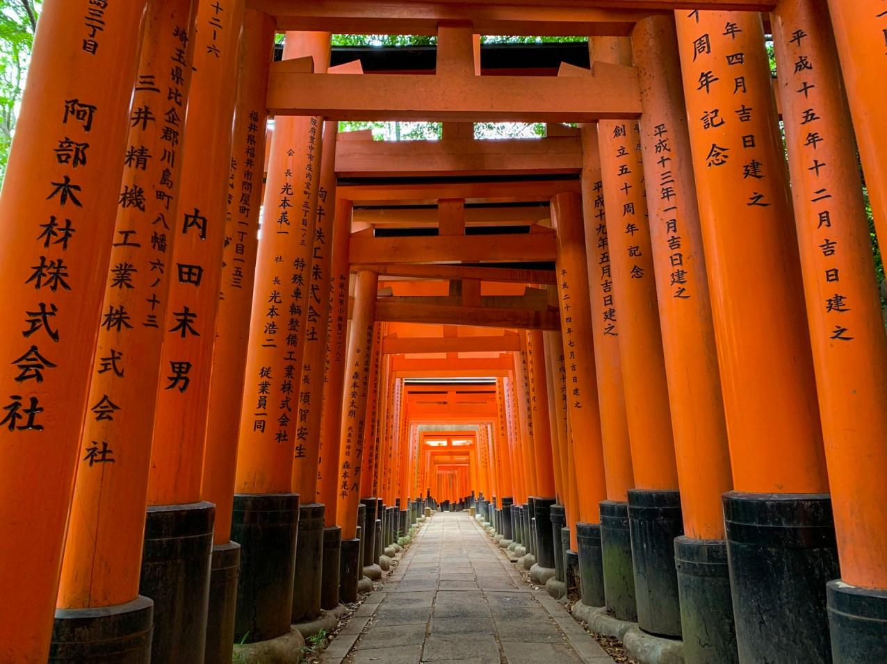 Tunnel of torii gates at the Fushimi Inari-taisha (伏見稲荷大社) shrine