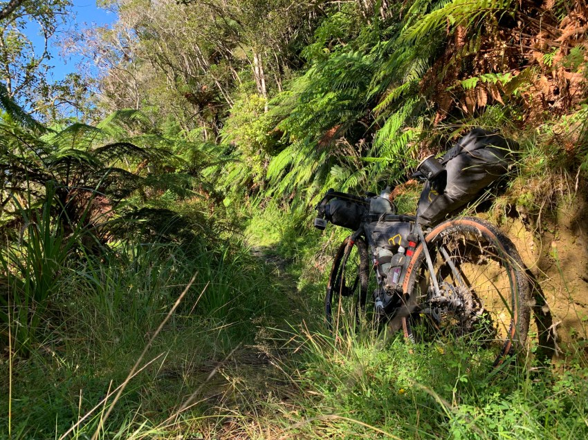 Gravel bike propped against the side of an overgrown forest trail, with thick fern tree foliage on both sides of the trail