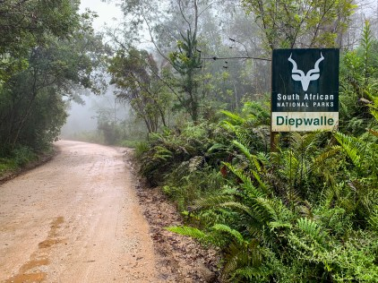 Dense, jungle-like vegetation, mist and fog made this an eerie experience.