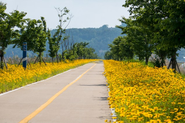 Blissful cycling along the path amidst blooming spring flowers