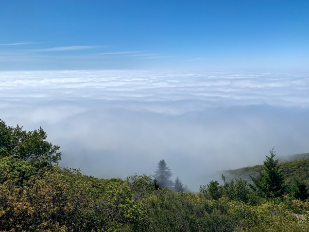 At 2,500 feet close to the top of East Peak, the rest of the North Bay and San Francisco remained in the fog.