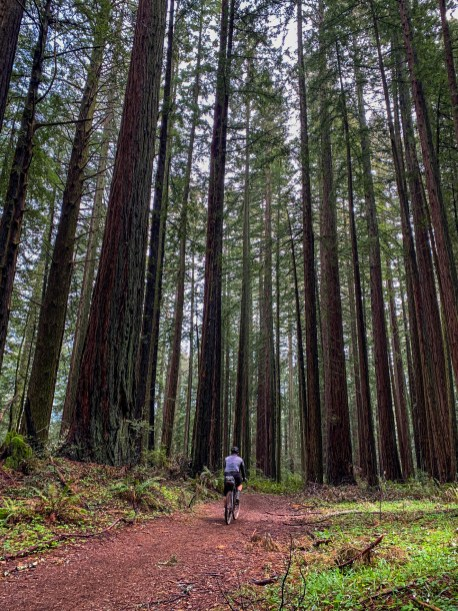 The second part of Bolinas Ridge Trail through Redwood forest in moist and cool conditions