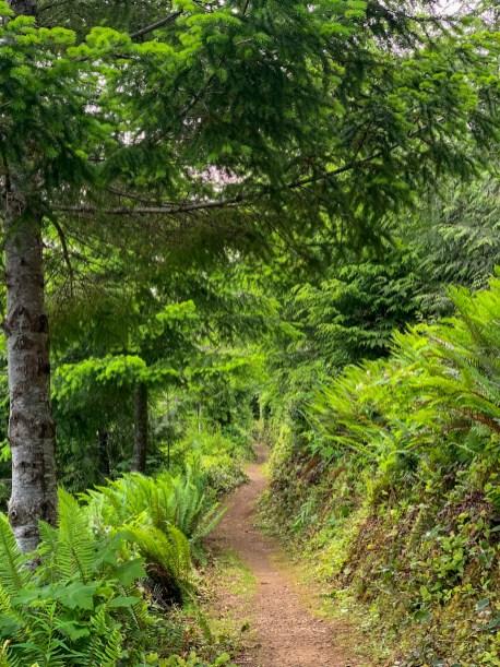 hiking trail weaving through dense forest vegetation