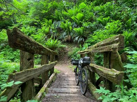 short wooden trail bridge
