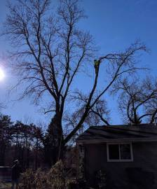 tree-service-1