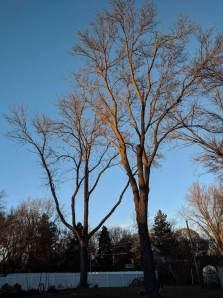 tree-service-2