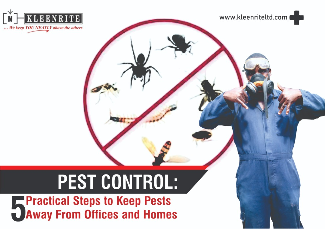 PEST CONTROL: 5 Practical Steps to Keep Pests Away From Offices and Homes