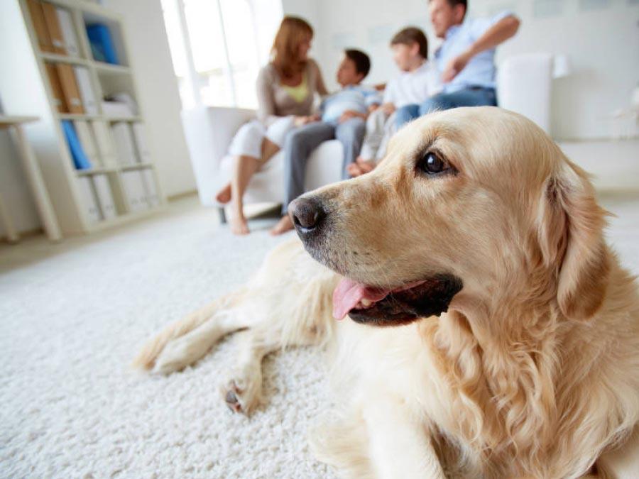 Να βάλω συναγερμό ή μήπως να πάρω σκύλο;