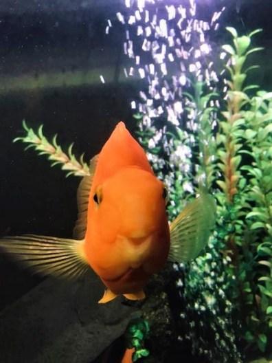 Steve the fish
