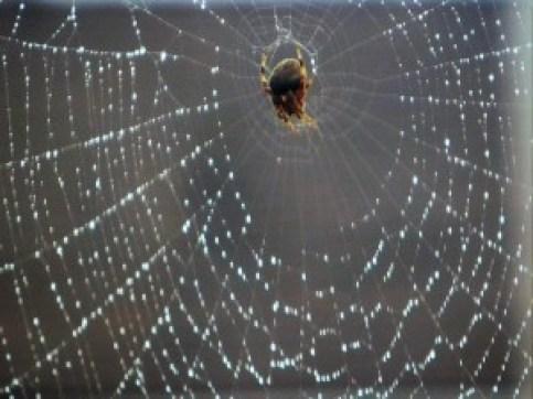 spider-in-the-rain2
