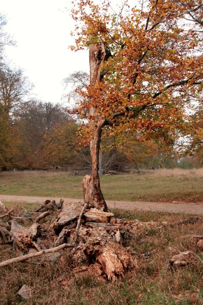 Een geamputeerde boom