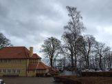 Achter de bomen: de winterbadning van Aarhus.