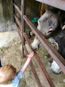 Esel streicheln auf dem Reierhof   Copyright: Anja Heuer