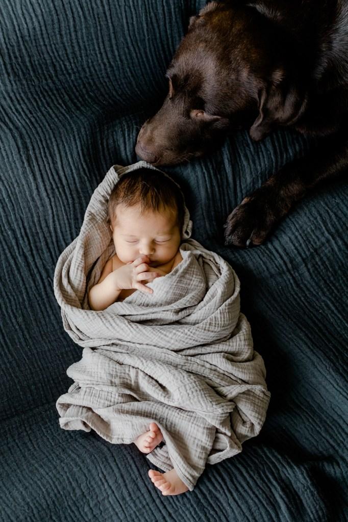 Neugeborenenfotos clean stilvoll zeitlos  Baby mit Hund