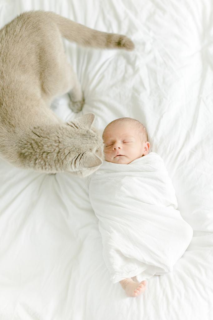 Fotoshooting Neugeborenes zu Hause Katze und Baby