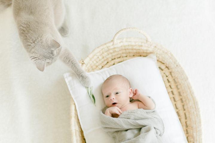 Baby im Moseskorb Babyfotos zu Hause
