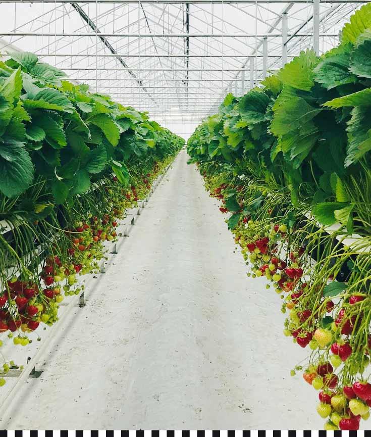 cafe-konditorei-heinemann-erdbeerplantage