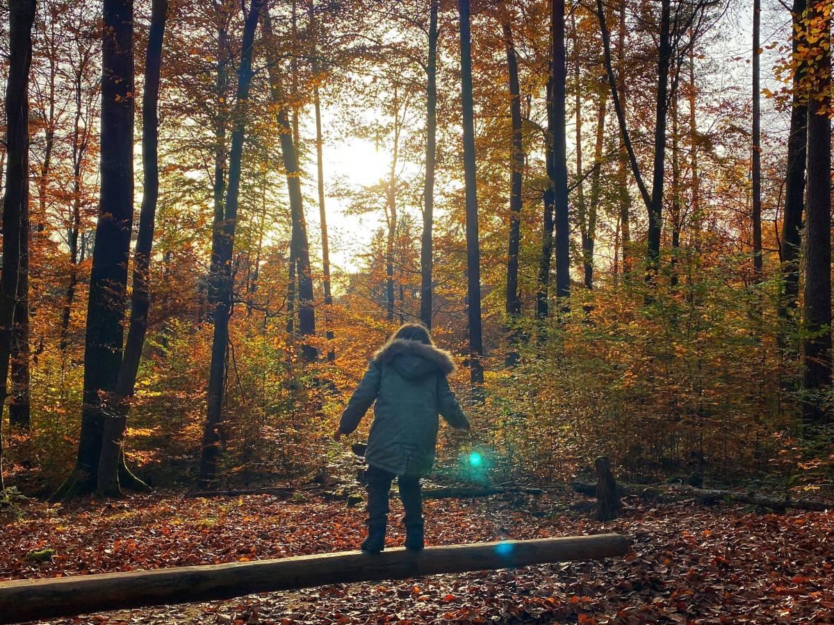 Wandern Herbst Schwarzwald