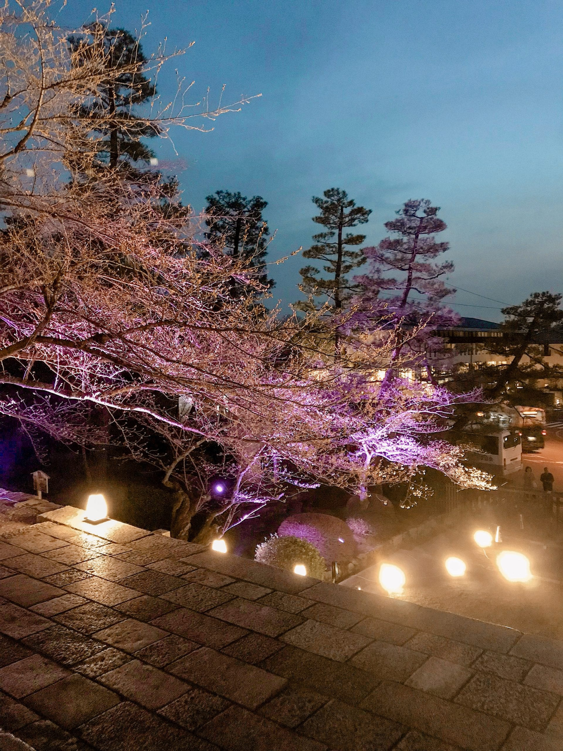 Kyoto Sakura night