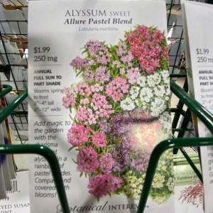 Alyssum Sweet Allure Pastel Blend
