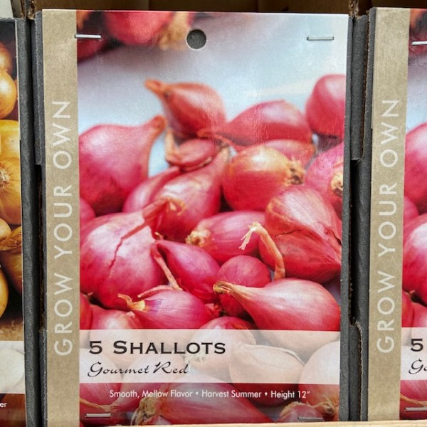 Shallots, Gourmet Red