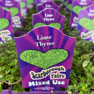 Thyme Lime