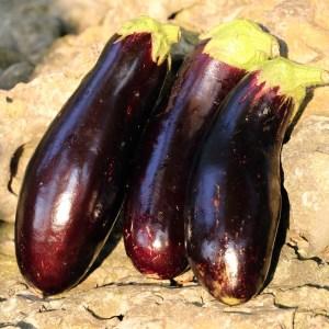 diamond eggplant