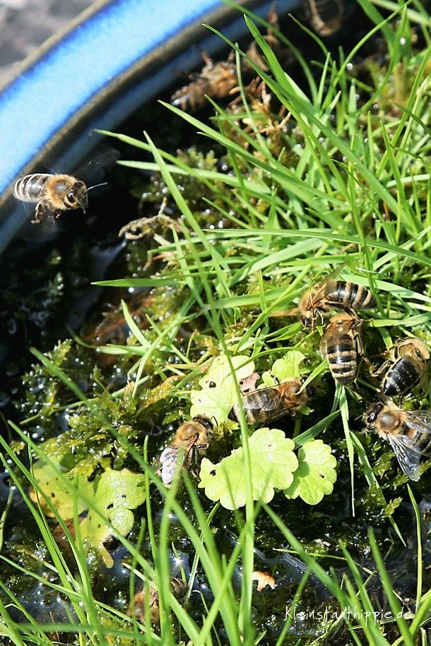 Hier können sich die Bienen mit Flüssigkeit versorgen ohne zu ertrinken