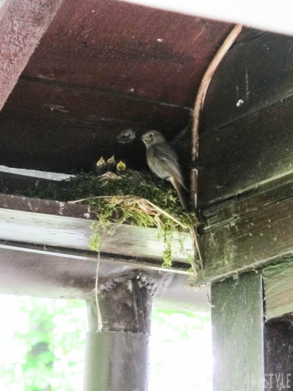 Muttergefuehle Faszination Natur Vogelfamilie by kleinstyle.com