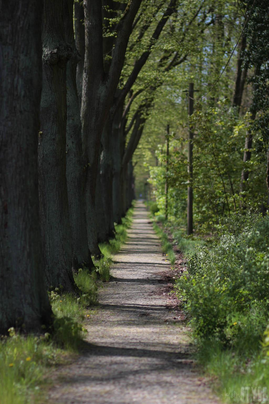 (Deutsch) Hallo Mai : von Festlichkeiten, To-Do Listen und dem Gefühl der Überforderung {inkl. Literatur & Tipps}