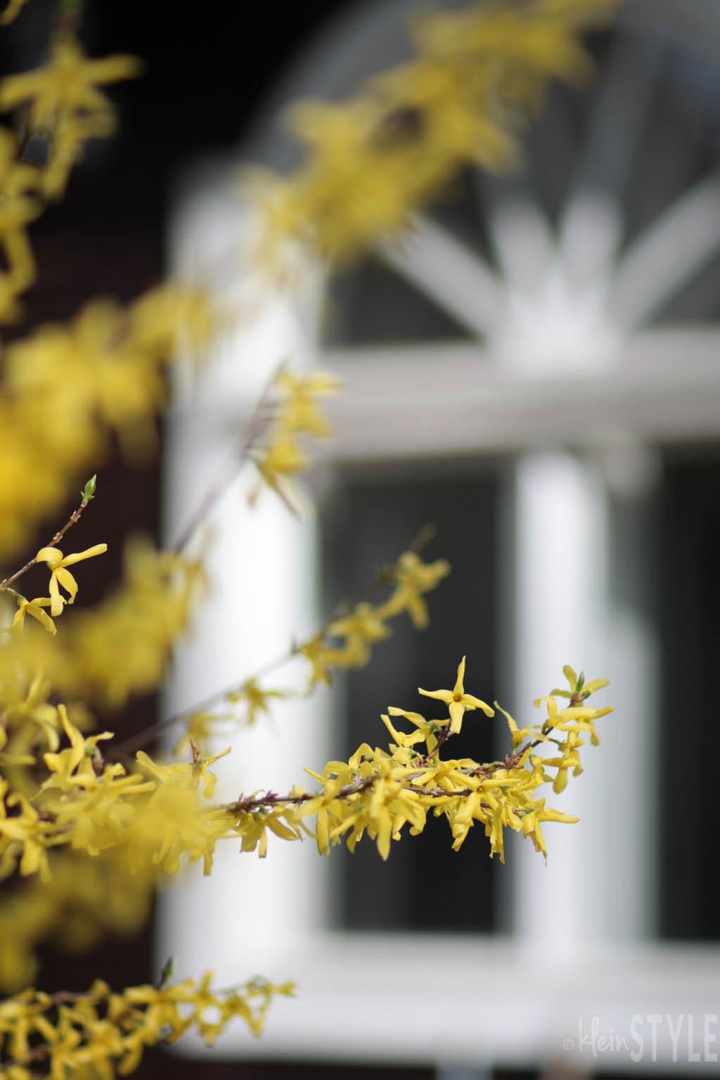 (Deutsch) Frühling : Zeit der Familien-Feierlichkeiten