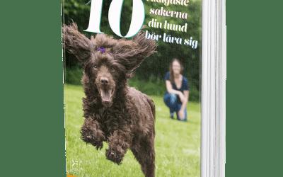 De 10 viktigaste sakerna din hund börlära sig