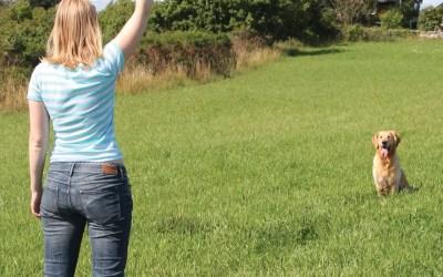 Onlinekurs: Stoppsignal – med återkoppling