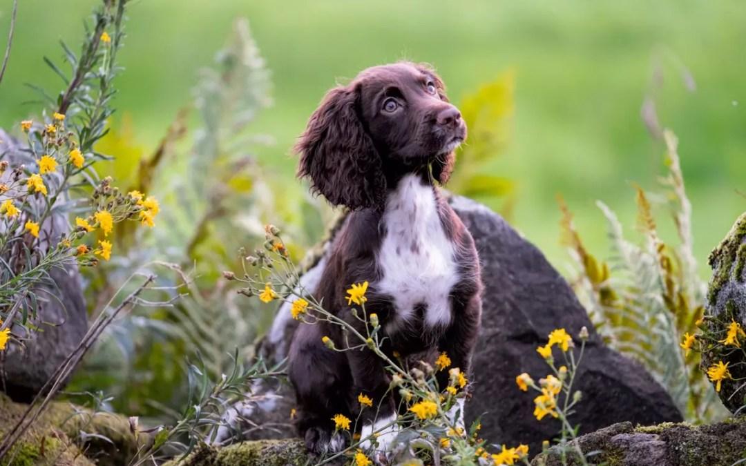 Vinn en valpkurs för fågelhundar online till en hel valpkull!